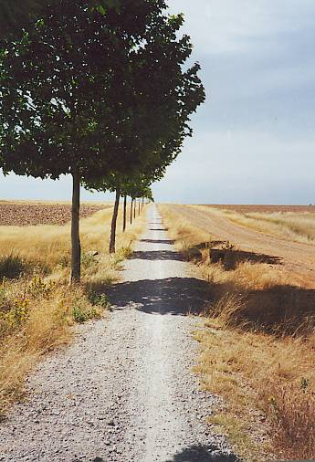 The Camino between Sahagun & Mansilla de las Mulas.